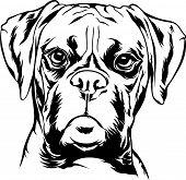 Animal Dog Boxer 5Ggtfvg.eps poster