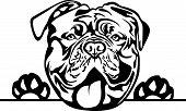 Animal Dog Mastiff 6T5R Peeking.eps poster