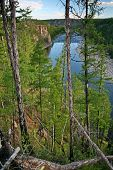 River On The Background Of Taiga And Blue Sky. Wild Nature. Far East, Sakhalin Island, Russia. poster
