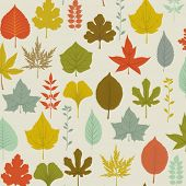 stock photo of walnut  - Autumn Leaves Pattern  - JPG