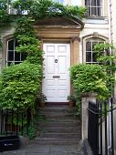 stock photo of english ivy  - White Georgian Door with Ivy on the Railings - JPG