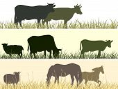 image of herd horses  - Horizontal vector banner - JPG
