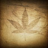 Cannabis leaf grunge background