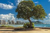 stock photo of waikiki  - Diamond Head and Waikiki seen from Point Panic on the south shore of Oahu Hawaii - JPG