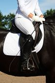 Dressage Rider Close Up