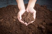 stock photo of fertilizer  - Peat Moss Soil On Hand Woman close up