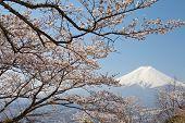 pic of mount fuji  - Mountain Fuji in spring  - JPG