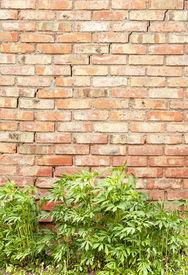 image of defloration  - red brick wall - JPG