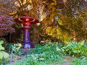 foto of glorious  - Glorious sheltered garden under a crimson - JPG