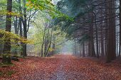 picture of coniferous forest  - path between beech and coniferous forests in autumn - JPG