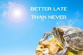 pic of craw  - metaphor of BETTER LATE THAN NEVER with turtle and sun background - JPG