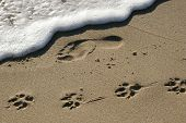 foto of dog footprint  - this photo represent foot and dog prints - JPG