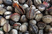 picture of edible  - Fresh Shellfish Blood Cockles market edible background - JPG
