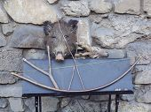 picture of stuffed animals  - A stuffed boar and deer next to the old weapons - JPG