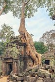 pic of raider  - Ta Prohm famouse giant tree with ancient roots - JPG