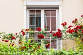 pic of english cottage garden  - Old Sash Windows with Window Box Gardens of a Old English Town House - JPG