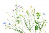 stock photo of wildflower  - Wildflowers isolated on white - JPG