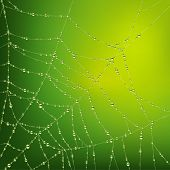 stock photo of spider web  - Vector image of the spider web with water drops - JPG