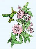 image of colibri  - Colibri and wild flowers - JPG