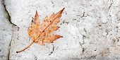 An Autumnal Leaf Fallen On To A White Quartz Rock Offers A Nice Contrast For This Natural Abstract,  poster