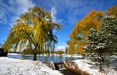 picture of weeping willow tree  - Scenic winter landscape - JPG