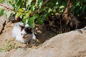 Two Homeless Kittens Are Sitting In The Bushes. Stray Cats. poster