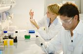 stock photo of insemination  - Two young researchers at work - JPG