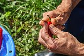 Red Hot Chili Pepper Cleaning. Cleaning Hot Pepper With A Knife. Old Mans Hands poster