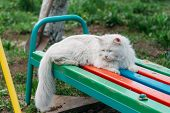 White, Dirty Cat Sitting On A Bench In The Garden, Squinting, Hungry, Lost, Homeless. Care For Anima poster
