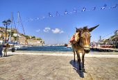 stock photo of hydra  - A donkey at the Greek island Hydra - JPG