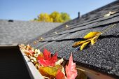 pic of gutter  - Rain gutter full of autumn leaves - JPG