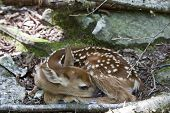 Spring brings new babies of all types.  Here is a baby fawn nestled along the trail