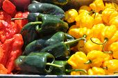 foto of poblano  - Arrangement of hot chili peppers at a farm in Asheville North Carolina - JPG
