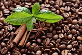 image of coffee crop  - coffee beans with anise and cinnamon stick  - JPG