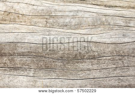 Old Wood Texture. poster