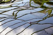 picture of luzon  - Rice terraces in Batad northern Luzon Infugao province Philippines - JPG
