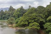 stock photo of royal botanic gardens  - River in the botanical Garden of Peradeniya Kandy - JPG