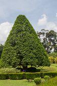 picture of royal botanic gardens  - botanical Garden of Peradeniya Kandy - JPG