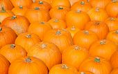 picture of gourds  - Colorful pumpkins collection on the autumn market - JPG