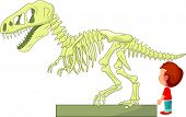 picture of dinosaur skeleton  - illustration of Boy with dinosaur skeleton at the museum - JPG