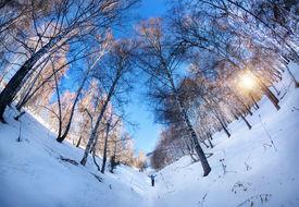 picture of birchwood  - Small tourist in Birchwood at mountains of Kazakhstan - JPG