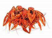 stock photo of crawfish  - appetizing red boiled crawfish on a white background - JPG