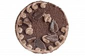 foto of truffle  - Truffle round cake on a white background - JPG