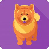 pic of chow  - Vector serious dog red chow - JPG