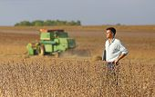 image of soybeans  - Conceived young businessman standing on soybean field during harvest - JPG