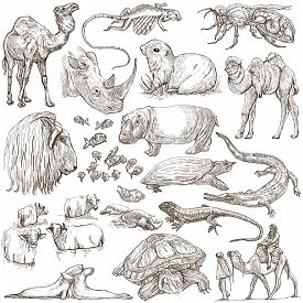 image of freehand drawing  - ANIMALS around the World - JPG