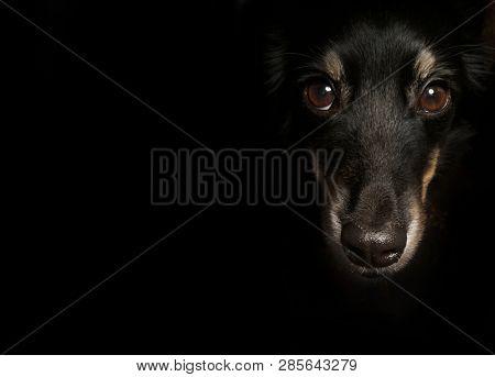poster of A dog on black background. Black dog