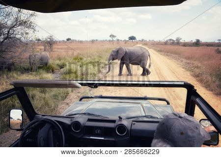 Picture Of An Elephant Crossing
