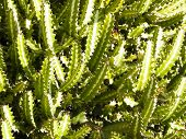 Close Up Of Green Cactus As Background. Botany And Nature Concept. poster