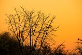 Dry Tree,dry Tree Silhouette With Sunrise Or Sunset,silhouette Dry Tree On A Sky Background poster